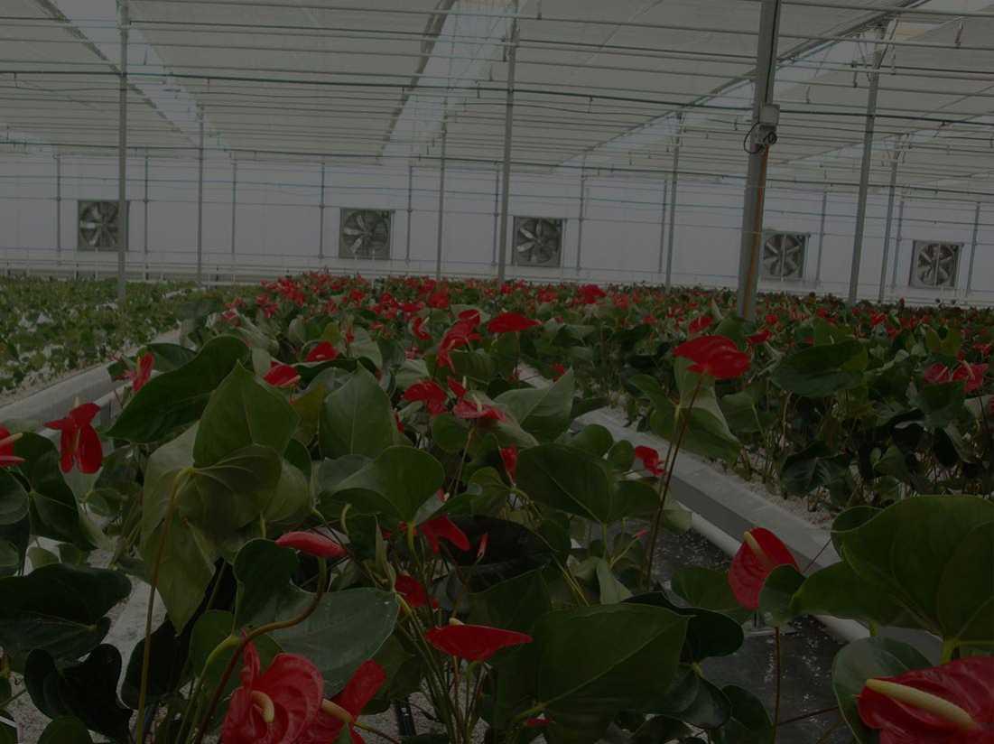 به کارگیری جدیدترین تکنولوژی های تولید گلخانه ها